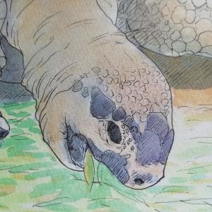 水彩画12枚目「世界象の日」