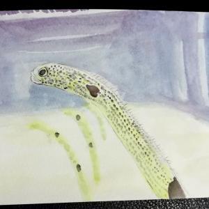 水彩画28枚目「チンアナゴさん」