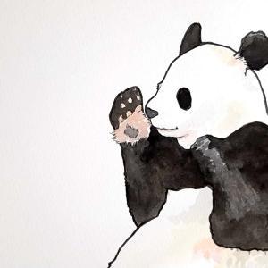 水彩画173枚目「ひそひそパンダさん」
