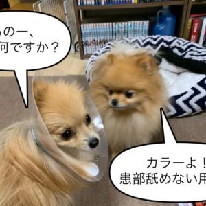 犬とお薬(皮膚用塗り薬)