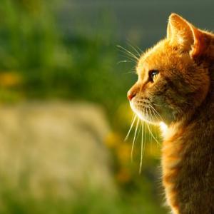 猫飼いの猫アレルギー