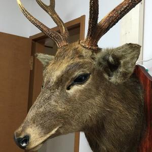 壁に掛かってる鹿の頭の剥製のやつって??