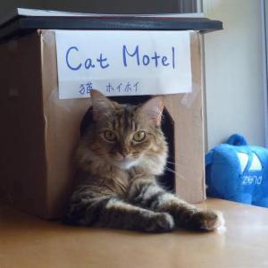 夫を 追い出した 猫のアレ