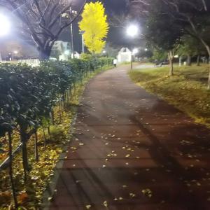 《お散歩のお話》近所にある体育館併設のジョギングコースをてくてく歩きました(*´ω`*)  VOL280ぱーん!