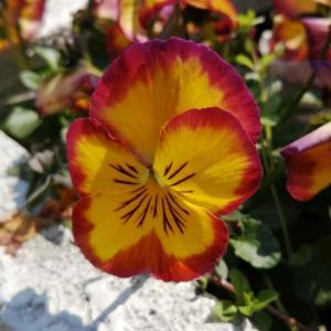 花の生命力はすごいのに、春が近いのに胸が苦しい。