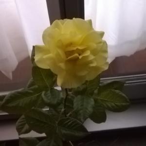 綺麗な花を咲かせて欲しい。