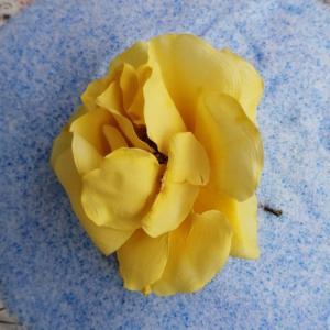 5月にに妻のバラの花が咲きましたので、保存したいと思いました。②