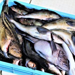 今シーズン初出漁
