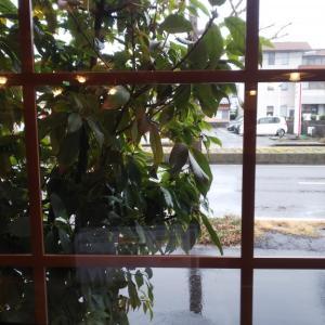 雨の休日。それもまた良し。