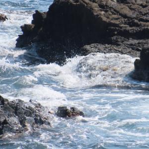 日本海美食物語・海の幸 喰処 えちぜん