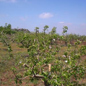 超まじめなスウェーダの人たち~絵入りりんご栽培技術普及プロジェクト売り込み@シャハバ~