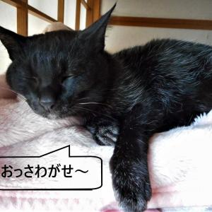 老い猫と寝不足