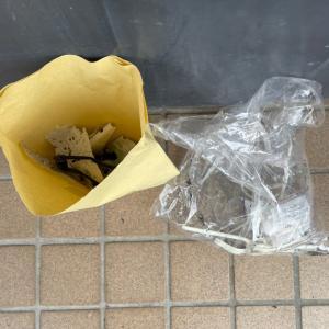 ゴミを拾ってぽいぽいのぽい活#113