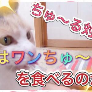 ちゅ~る対決  猫ちゃん達にワンちゅ~る食べるかな?
