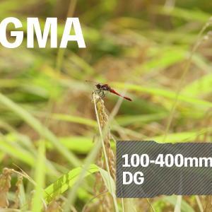 「絵になる写真」量産機【SIGMA 100-400mm F5-6.3 DG OS HSM】#5