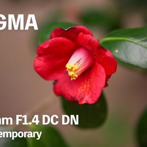 これがSIGMAのやり方【SIGMA 56mm F1.4 DC DN】#2
