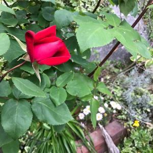 風薫る庭 5月