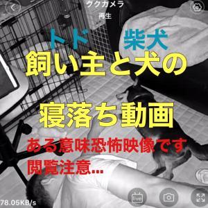 飼い主と犬の寝落ち動画