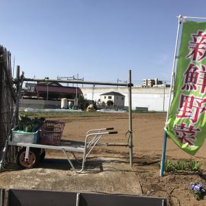 地元農家の路面で買える新鮮野菜♪
