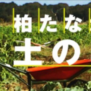 柏たなか農園で夏野菜収穫とピザ焼き体験イベントがあります(´∀`)