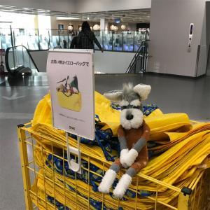 【シュナる旅】IKEAでお買い物=͟͟͞͞ (✦◡̶͂✦)ᵎᵎ