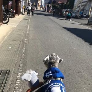 【シュナる旅】茨城『真壁のひなまつり』へGo![ソックシュナとおでかけ]