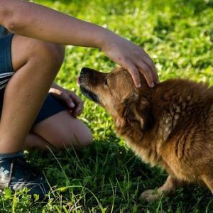 犬の飼い方を知るには?必要な知識を得るための本のおすすめは?