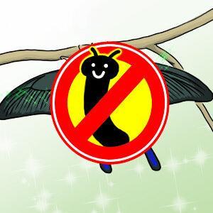 【虫】カラスアゲハが羽化しました!