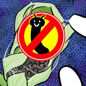 【虫】ヒメアカタテハ幼虫は、ヨモギに巣を作って引きこもる(はずだった)