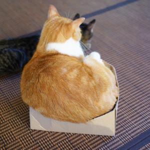 久しぶりに保護猫カフェ「鎌倉ねこの間」さんへ