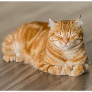 日本の猫の日は2月22日!便利なネコ用品やかわいいネコ動画まとめ!