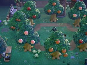 小さな果樹園
