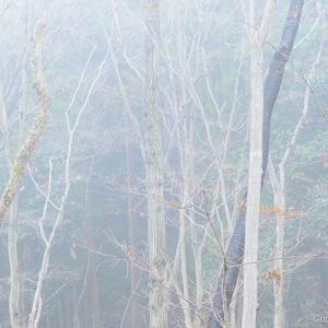 霧の「青梅の森」から石動神社へ
