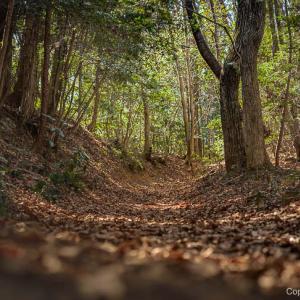天祖神社から吉野梅郷に続く、長渕山ハイキングコースを、ノンビリ歩く