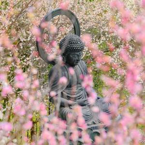 梅に包まれた山間の禅寺、あきる野の徳雲院