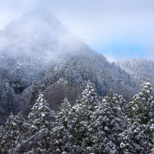 春なのに雪景色「なごり雪」を口ずさむ、御岳山・花散歩
