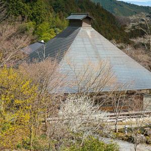 あきる野・乙津の梅の山里と龍珠院を巡る、ほっこり旅