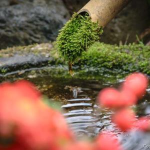 花と水の寺、青梅・地蔵院 咲く花を愛で、散る花を愛おしむ