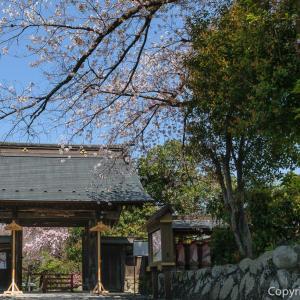 桜だけじゃない!花と新緑の青梅・玉泉寺