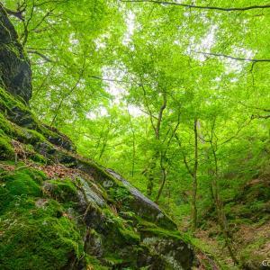 花と緑と鳥と滝、梅雨前の御岳山を歩く旅