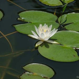 穴場中の穴場?季節外れの青梅・吹上しょうぶ公園で、静かに睡蓮を愛でよう!