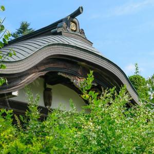 謎の「白萩」花咲く、あきる野・大悲願寺