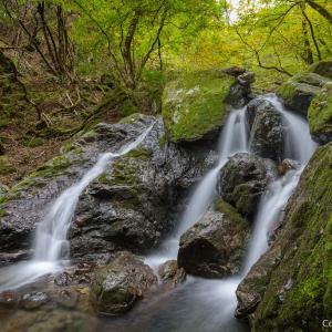 御岳山から大滝へ、森と神社と滝を巡る、大岳山登山