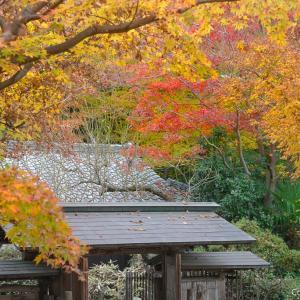 紅葉の穴場的・日本庭園?青梅の臨川庭園