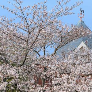 羽村の堰から武蔵阿蘇神社へ、桜の堤を歩く小旅