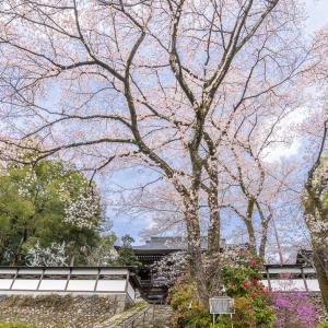 まさに花園、青梅・海禅寺を訪ねる