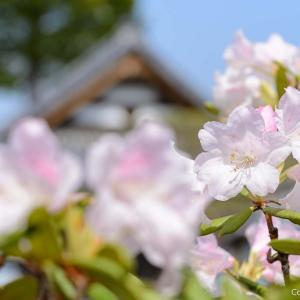 普門寺・二宮神社…あきる野市・東秋留周辺の、花と歴史と湧き水を散策