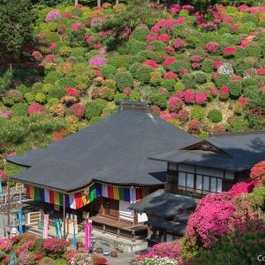 圧倒的・ツツジの山!青梅の塩船観音寺は、死ぬまでに観たい、絶景