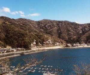 【福井県の釣り】神子漁港で子供たちと五目釣り【4月】