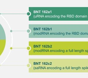 Pfizer/BioNTechの新型コロナワクチン候補(BNT162a1,BNT162b1,BNT162b2,BNT162c2)